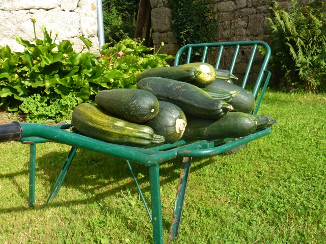 grosses courgettes