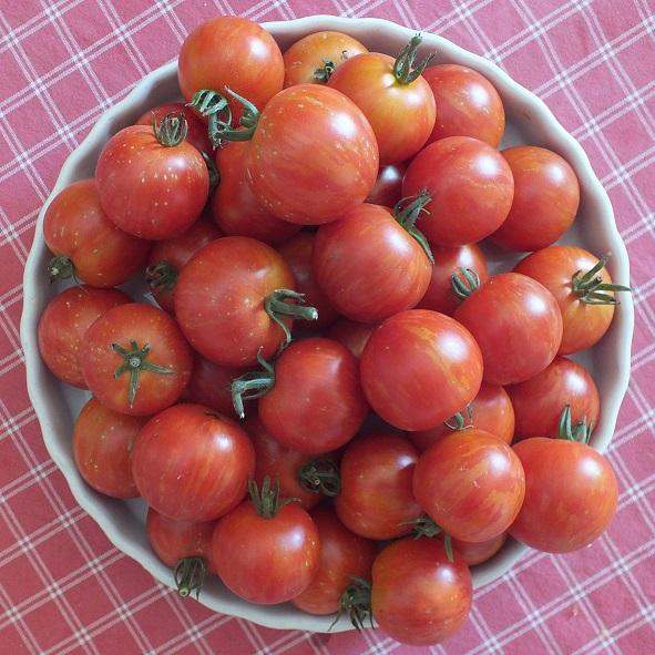 tomate  marzano