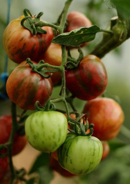 tomate ananas bleu