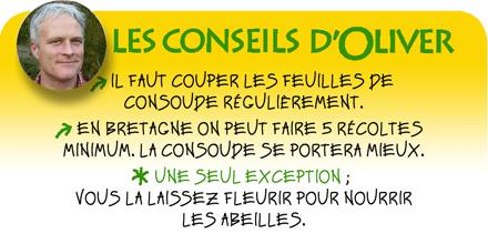 consoude-bocking14