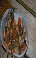 cueillette-escargots-et-limaces