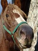 photo de cheval
