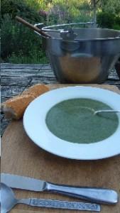 soupe d'ortie