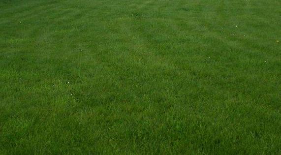 photo de pelouse