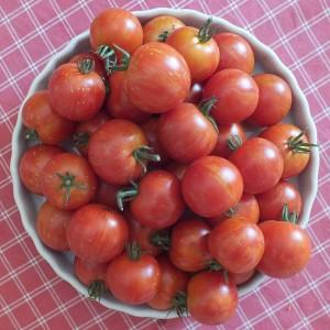tomates de la variété tigrella