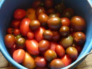 tomates à ketchup
