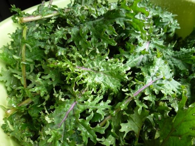 feuilles de kale