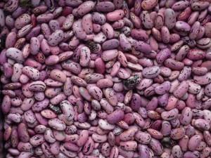 graines de haricots d'Espagne