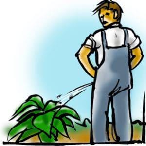 fertiliser la consoude