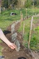 plantation lavande