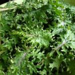 feuilles-de-kale-150×150